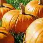 Pumpkin Pie Cake: a Favorite Family Recipe