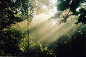 sunlight through trees as a reminder that everything will be okay