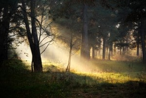 ray of sun in woods