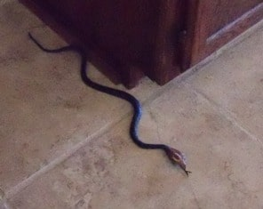 fake snake by cabinet remember the day a child is born