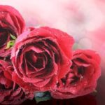 pink roses with raindrops_what if you only had three more years to live